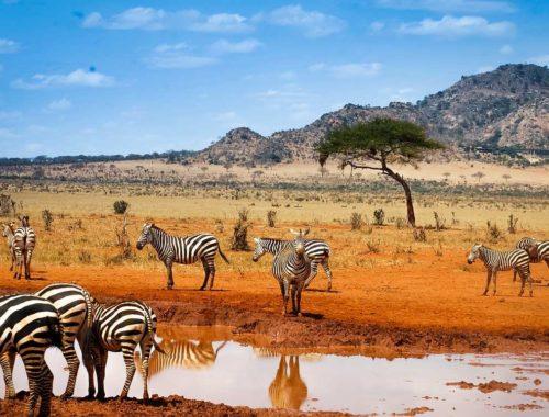 На каком языке говорят в Африке