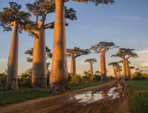 На каком языке говорят в Мадагаскаре
