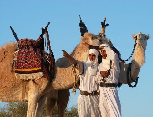 На каком языке говорят в Тунис